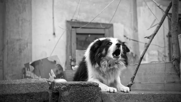 dog-4081023_640