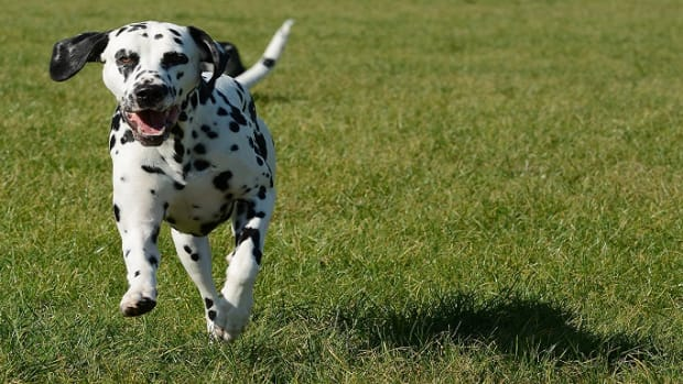 Why Do Dogs Run After Pooping