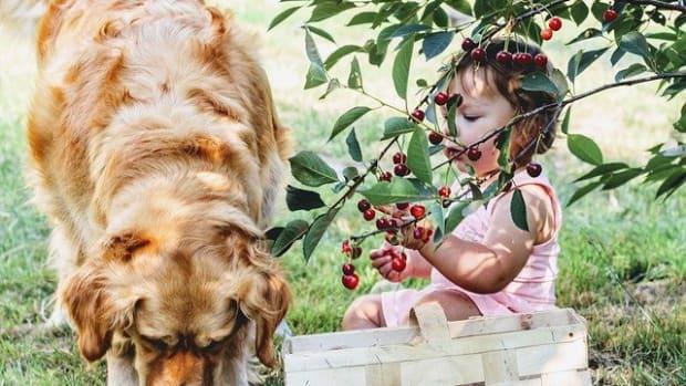 cherries-3497780_640
