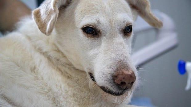 dog-4940471_640