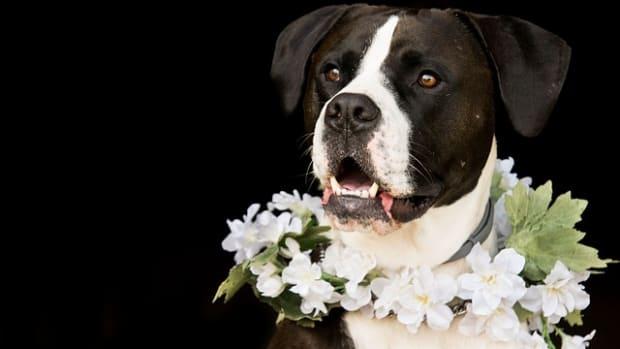 dog-3389334_640