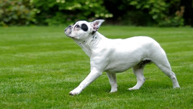Why Do Dogs Circle Before Pooping