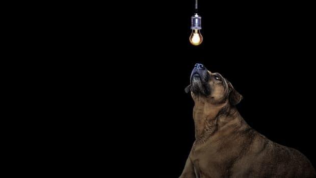 dog-3435827_640