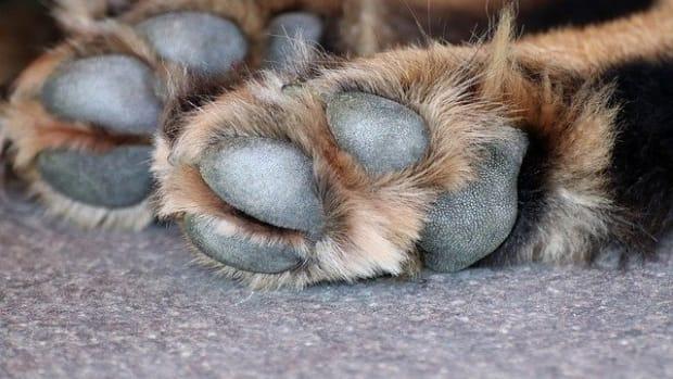 dog-paw-3612394_640