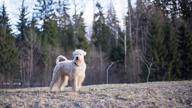 dog-3350718_640