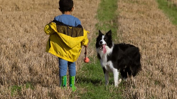 boy-and-dog-in-field-4560039_640
