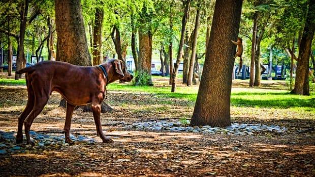 dog-3963165_640