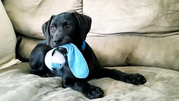 puppy-4112121_640
