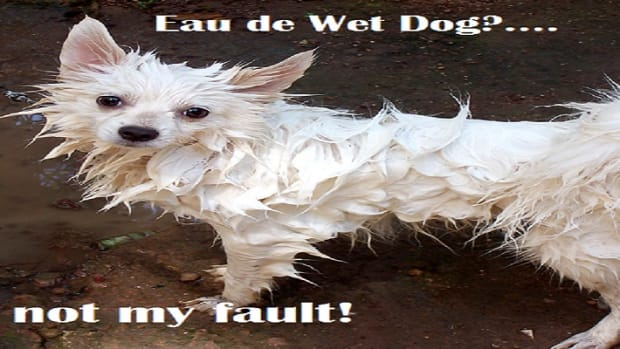 What causes wet dog smell