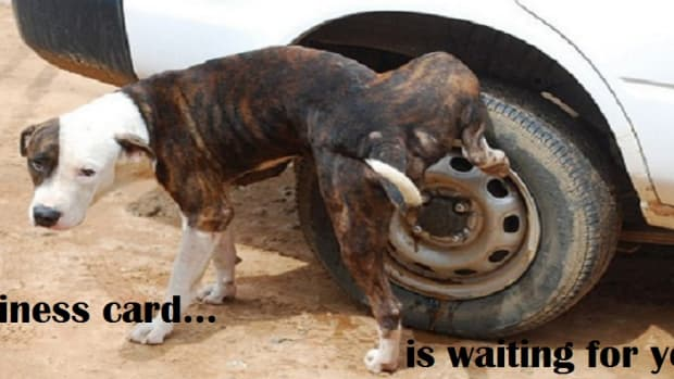 Dog pissing on car tire