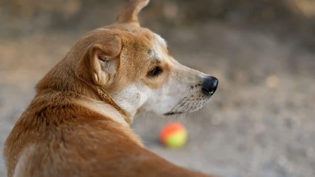 dog-1057679_640