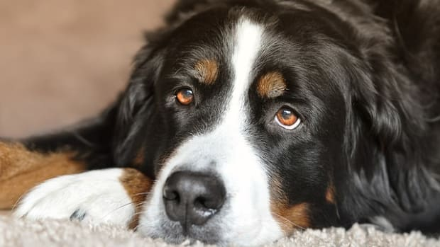 dog-2668993_640