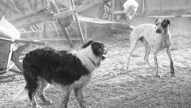 dog-2552937_640
