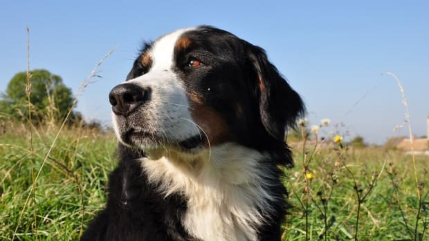 Frontline in Dogs