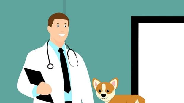 Dog's Physical Exam