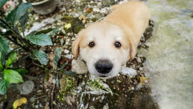 Ask the Vet: What's The Five in One Vaccine For Dogs?