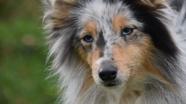 Do Dogs Need Tetanus Shots?