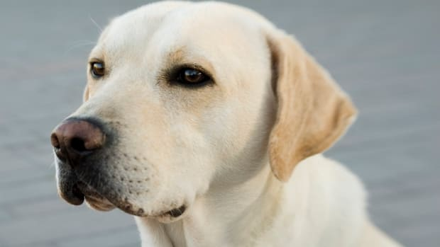 Dog Urinary Tract Infections