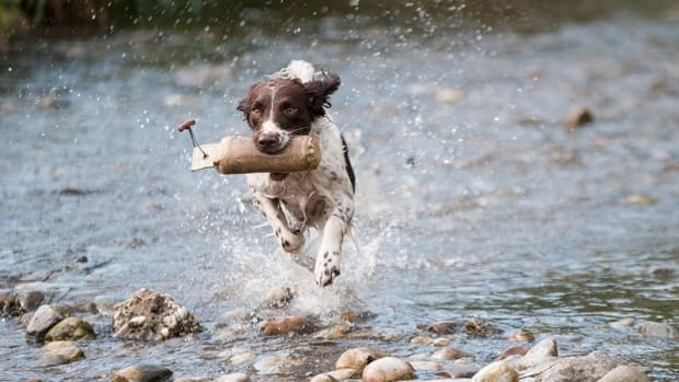 What Exercises Help Strengthen a Dog's Hind Legs?