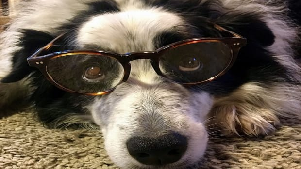 Vision Problems in Dogs