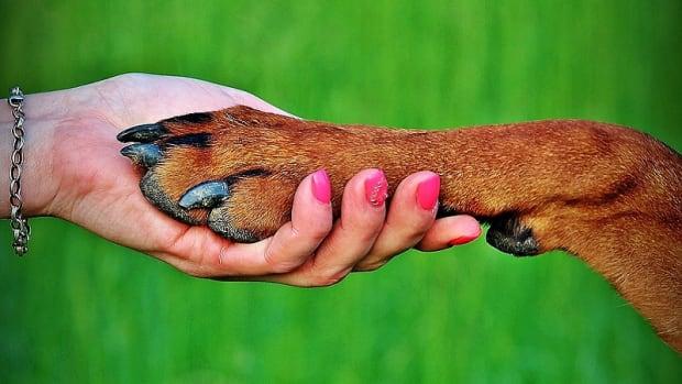 Dog Nail Melanoma
