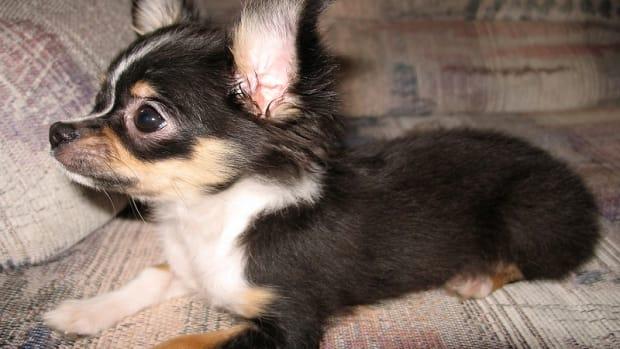 Dog Bleeding Nail Home Remedies