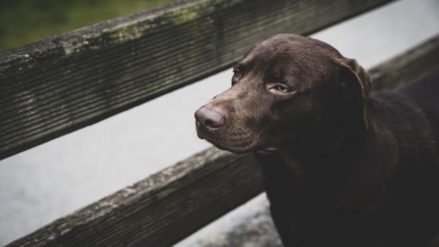 Dog's Poop Turn White