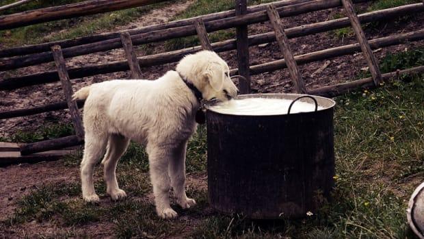 dog retractable leash
