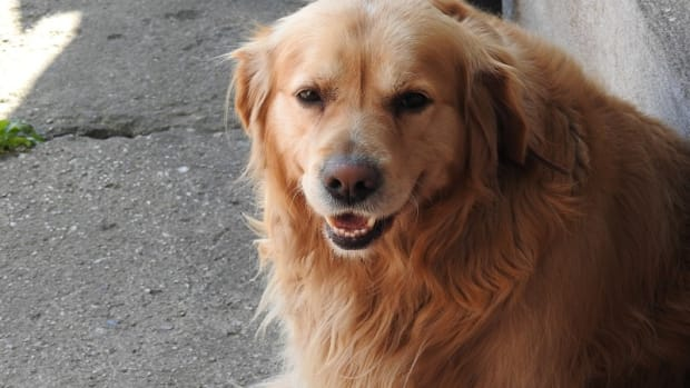 Stomach Cancer in Dogs