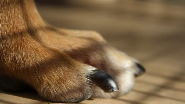 How Often Should You Trim a Dog's Nails?