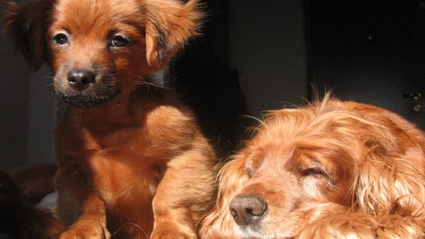Drugs Toxic to Kidneys in Dogs