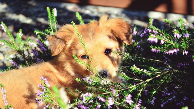 Ticks Versus Skin Tags in Dogs