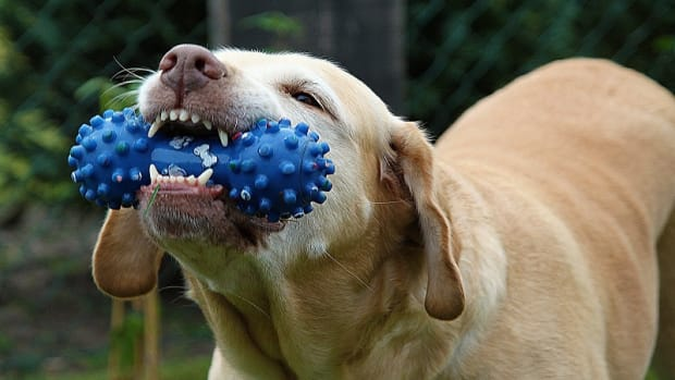 Items Safe For Dogs to Chew