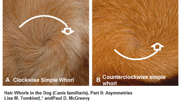 dog hair whorl