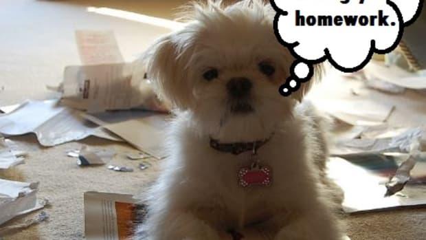 dog homework