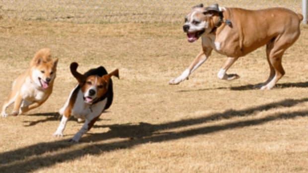 dog fun police
