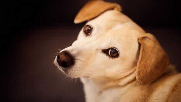 Suburban Dog Syndrome