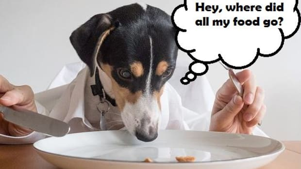 dog-eating-fast