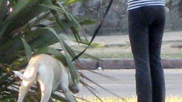 dog-wont-potty-on-leash