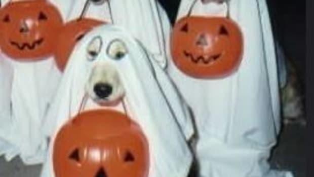 ghost-dog