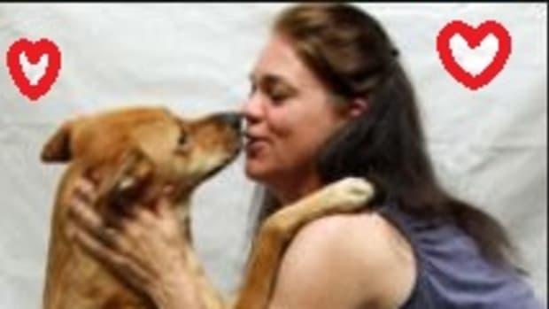 dog-kissing
