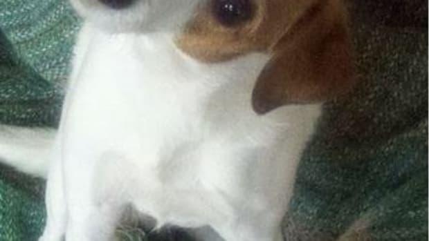 dog-skin-tags