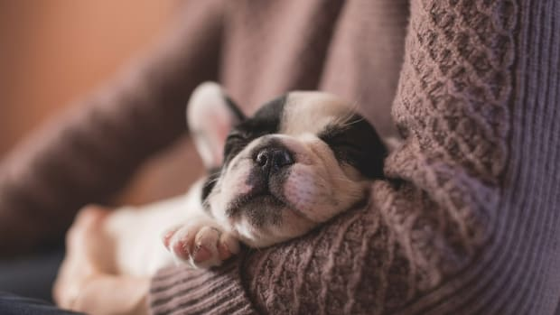 How to Get Rid of Fleas From Newborn Puppies