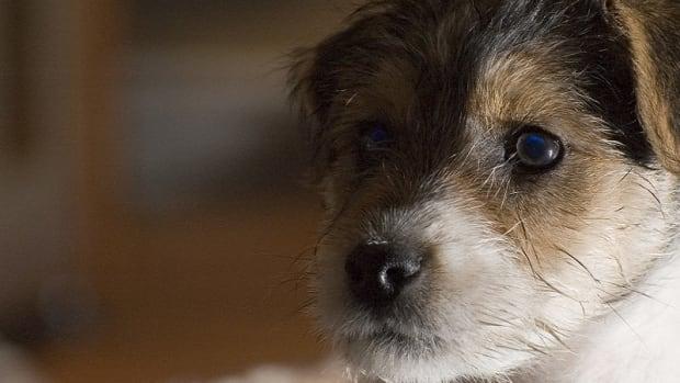Puppy Imprinting Process