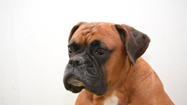 Head Bobbing in Dogs