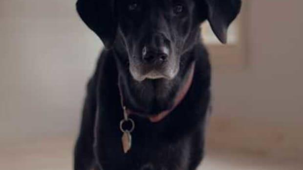 old dog remedies arthritis