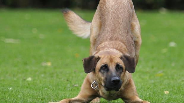 dog-173007_1920
