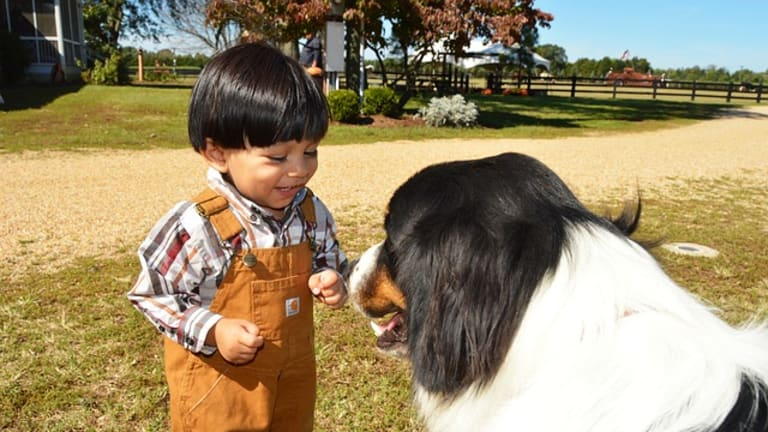 Why Do Dogs Lick Baby or Toddler Faces?