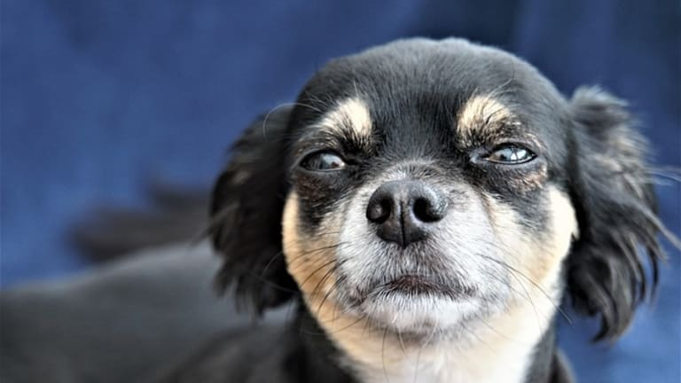 Why Do Dogs Have Whiskers Under The Chin?