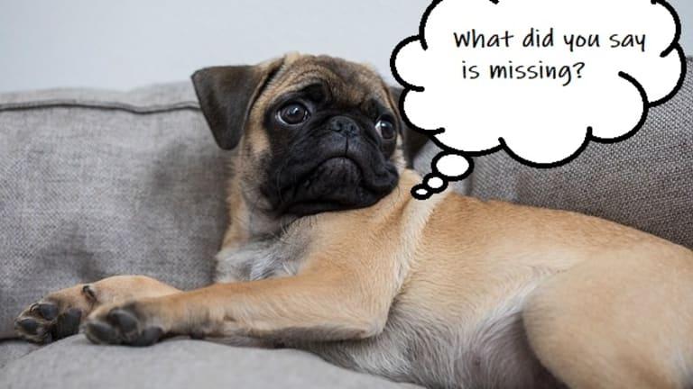 Ask the Vet: When Do Puppy Balls Drop?